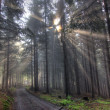 Gift of Light - God beams - coniferous forest in fog — Stock Photo