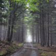 Road in foggy coniferous forest — Stock Photo