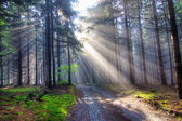 Regalo de la luz - rayos de dios — Foto de Stock