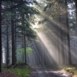 Stock Photo: Sunshine - coniferous forest in fog