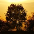 Autumn tree and sun — Stock Photo