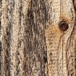 ������, ������: Knot in wood wood texture