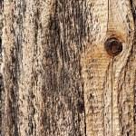 Постер, плакат: Knot in wood wood texture