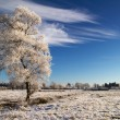 Idyllic winter scenery — Stock Photo