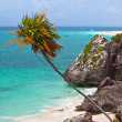 Coast of Tulum — Stock Photo