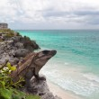 Iguana on the cliff — Stock Photo #6308290