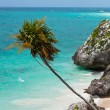 Coast of Tulum — Stock Photo #6308528