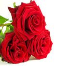 Beautiful red roses — Stock Photo
