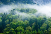 Gorgeous green forest in the fog — Stock Photo