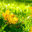 Fallen leaves on the bright green grass — Stock Photo