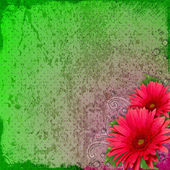 Spring dots grunge background with gerber flowers — Stock Photo