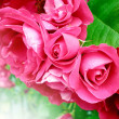 Close-up of beautiful red roses — Stock Photo