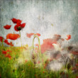 Grunge poppies background — Stock Photo #6119742
