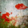 Grunge poppies background — Stock Photo #6119749