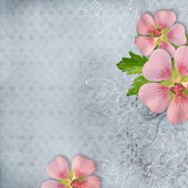 Background for greeting card — Stock Photo