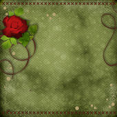 Beautiful background with red rose — Stock Photo