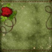 Krásné pozadí s červenou růží — Stock fotografie