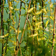 Willow branches with flowers — Stock Photo #5580901