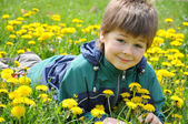 The boy lies in the dandelions — Stock Photo