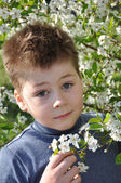 The boy and the cherry blossom in spring — Stock Photo