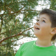Stock Photo: Boy in woods. Looks up in surprise