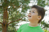 The boy in the woods. Looks up in surprise — Stock Photo