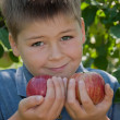 Stock Photo: A boy with a delicious red apples