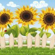 Sunflowers — Stock Vector