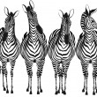 Zebras — Stock Vector #5799173