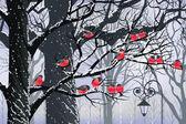 Bullfinches na drzewach — Wektor stockowy
