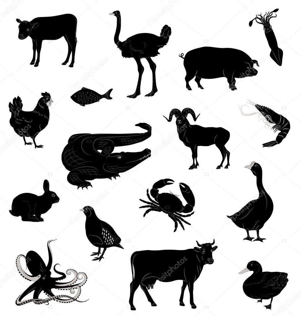 Various Animals Various Animals — Vector