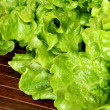 Stock Photo: Butter Lettuce