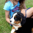 Bernese mountain dog and girl — Stock Photo