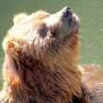 Brown bear — Stock Photo #6453419