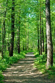 Path in summer forest — Stock Photo