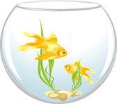 Two goldfishes in the aquarium — Stock Vector