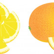 Stock Vector: Lemon and orange