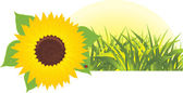 Sunflower with grass. Banner — Stock Vector