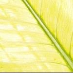 kwietniki — Zdjęcie stockowe