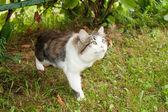 Motley cat — Stock Photo