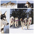 Stock Photo: Sportive dogs in snow