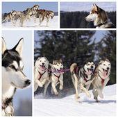 雪の中で陽気な犬 — ストック写真