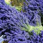 Basket of lavender — Stock Photo