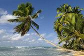 Caraibean beach — Stock Photo