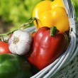 Vegetables gerden - Stock Photo