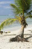 Coconut Palms — Stock Photo