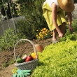 Woman is gardening — Stock Photo