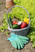 Vegetables gerden — Stock Photo