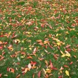 Fallen Leaves — Stock Photo #6450742