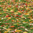 Fallen Leaves — Stock Photo #6450752